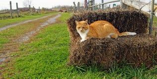 Gato de la granja Fotografía de archivo libre de regalías