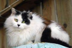 Gato de la granja Imagen de archivo