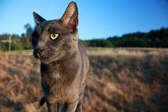 Gato de la granja Imagen de archivo libre de regalías