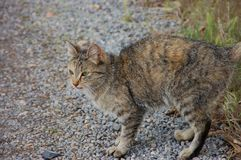 Gato de la granja en alarma Imagenes de archivo