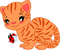 Gato de la historieta con la mariquita ilustración del vector