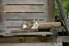 Gato de la iglesia Imagen de archivo