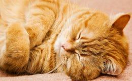 Gato de la Isla de Man anaranjado - Imagen de archivo