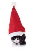 Gato de la Navidad Imágenes de archivo libres de regalías