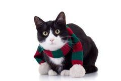 Gato de la Navidad Imagen de archivo