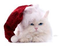 Gato de la Navidad Fotos de archivo