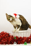 Gato de la Navidad Foto de archivo