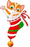 Gato de la Navidad en calcetín Imagen de archivo libre de regalías