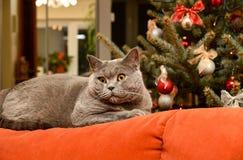 Gato de la Navidad en el sofá Foto de archivo