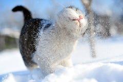 Gato de la nieve Imágenes de archivo libres de regalías