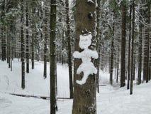 Gato de la nieve en el bosque del invierno Imágenes de archivo libres de regalías