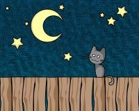 Gato de la noche Imagen de archivo