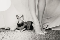 Gato de la novia Fotos de archivo