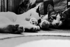 Gato de la ráfaga Fotos de archivo