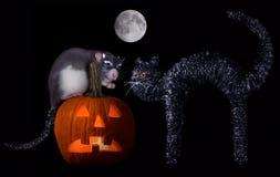 Gato de la rata de Víspera de Todos los Santos Fotos de archivo libres de regalías