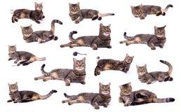 Gato de la relajación Imagen de archivo libre de regalías