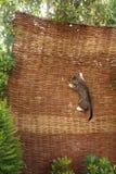 Gato de la subida Fotografía de archivo libre de regalías