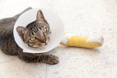 Gato de la tablilla de la pierna quebrada Foto de archivo libre de regalías