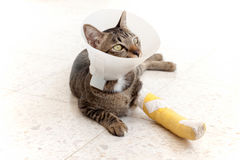 Gato de la tablilla de la pierna quebrada Imagen de archivo