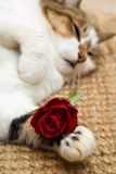 Gato de la tarjeta del día de San Valentín fotos de archivo
