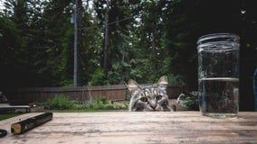 Gato de la travesura fotografía de archivo libre de regalías
