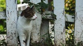 Gato de la vecindad imagen de archivo libre de regalías