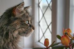 Gato de la ventana Fotografía de archivo libre de regalías