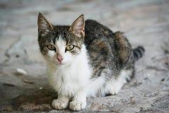Gato de la yarda fotografía de archivo libre de regalías