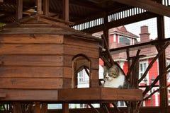 Gato de lindo divertido del encanto de la casa de la jaula foto de archivo