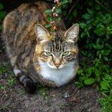 Gato de los ojos verdes en la sombra foto de archivo libre de regalías