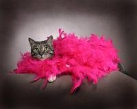 Gato de lujo Imágenes de archivo libres de regalías