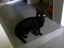 Gato de Luna Imagen de archivo libre de regalías