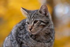 Gato de gato malhado bonito com fundo amarelo fotos de stock royalty free
