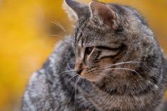 Gato de gato malhado bonito com fundo amarelo imagem de stock royalty free