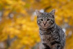 Gato de gato malhado bonito com fundo amarelo imagem de stock