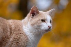 Gato de gato malhado bonito com fundo amarelo imagens de stock royalty free