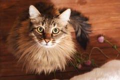 Gato de gato malhado bonito que senta-se e que olha acima Foco seletivo foto de stock