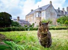 Gato de gato malhado com fora da casa senhorial inglesa do foco no fundo foto de stock royalty free