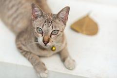 Gato de gato malhado e folha do outono Imagens de Stock