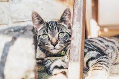Gato de gato malhado listrado que encontra-se olhando a câmera fotos de stock royalty free