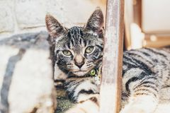 Gato de gato malhado listrado que encontra-se olhando a câmera fotografia de stock