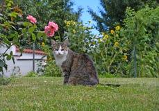Gato de gato malhado na grama verde fotografia de stock royalty free