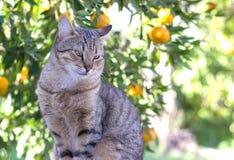 Gato de gato malhado no pomar de fruto Imagens de Stock Royalty Free