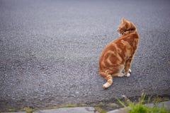 Gato de gato malhado vermelho do gengibre novo adorável que senta-se em uma janela pealing da pintura de uma casa velha foto de stock