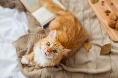 Gato de gato malhado vermelho que encontra-se na cobertura em casa no outono fotografia de stock