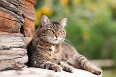 Gato de mentira Foto de archivo libre de regalías