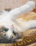 Gato de mentira Fotos de archivo