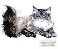 Gato de Neva Masquerade ejemplo del animal doméstico del hogar de la acuarela Los gatos crían series ilustración del vector