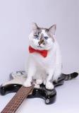 Gato de ojos azules con la corbata de lazo roja y la guitarra eléctrica Imagenes de archivo