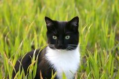 Gato de ojos brillantes fotografía de archivo